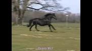 Horses - Oxana!