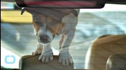New Tennessee Law Allows People to Save Pets From Hot Cars