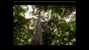 Най - Опасните Животни В Света - Харпия-Коста Рика