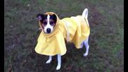 Малкото куче с жълтия дъждобран