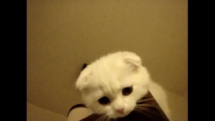 Коте с клепнали уши