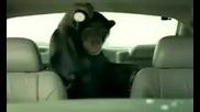 Маймуна автоаларма