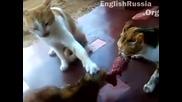 Господари на Ефира - 3 Котки 1 пържола