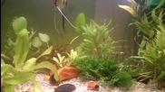 Любителски аквариум