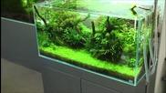 Аквариумите на японски акварист