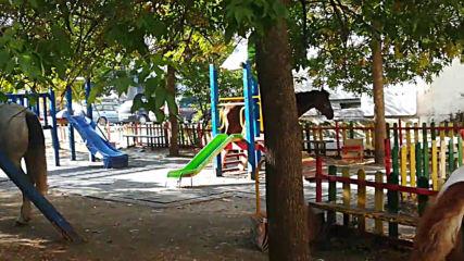 Конска действителност на детска площадка