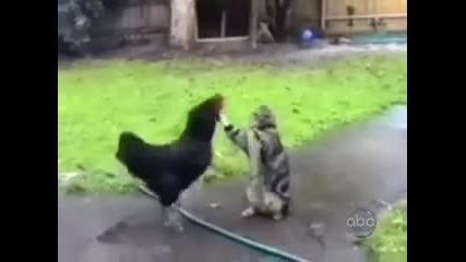 Смешни котки-гаранция 100% смях!