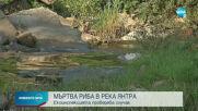 Стотици килограми мъртва риба изплува по бреговете на Янтра