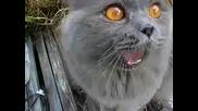Странна Котка