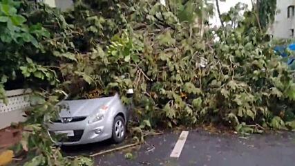 India: Fallen trees strewn across Mumbai in aftermath of Cyclone Tauktae
