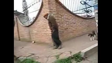 Пиян старец на улицата