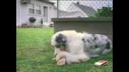 Кучето, Което Говори И Пуши Цигара ;)