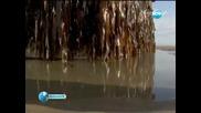 165-тонен Пристанищен Док От Япония Изплува В Сащ Нова Тв 07.06.2012 г.