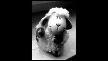 Сладки Овце x]