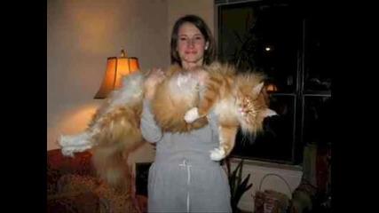 тази котка е направо.