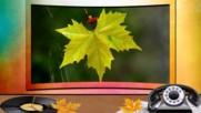 Есенни натюрморти! ... ...