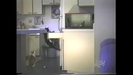 Компилация смешни животни