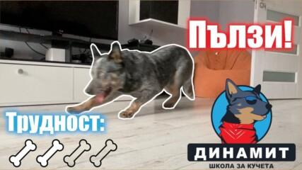 Как да научим кучето да Пълзи