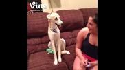 Кучето се смее заедно с момичето !