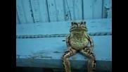 жаба седи кото човек