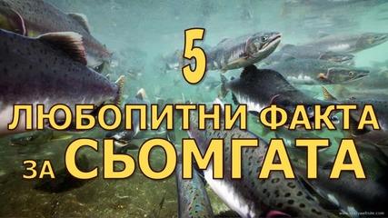 5 любопитни факта за сьомгата
