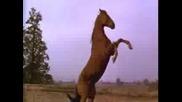 It s My Life - Horses