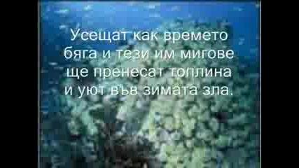 Ах Морето...