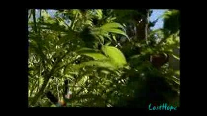 Супер Трева (2010) част 2