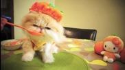 Сладко котенце си подсигурява Vitamin C от плодове