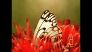 Невероятни пеперуди
