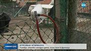 Питбул нападна 4-годишно дете и баба му в Дупница