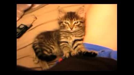 Смешна Малка Котка