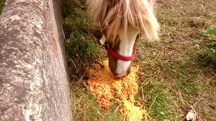 Pony eating spaghetti :)