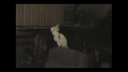 Папагал Пее И Танцува - Много Смях