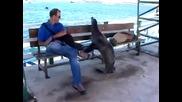 Нахален морски лъв ляга на пейката принуди човека да стане , смях