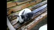 Котето ми Рико и зайчето ми!