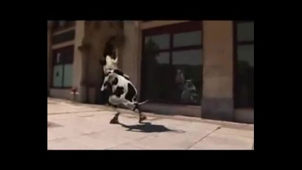Лудата крава рапър