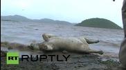 India: Ten endangered lions among wildlife killed in monsoon floods