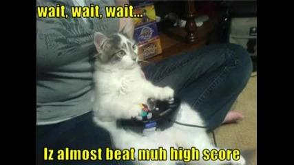 Много смешни снимки на котки !!!