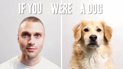 Вашият живот като куче