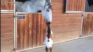 Безстрашно и игриво козле се закача с кон