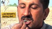 Човек яде живи скорпиони