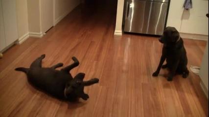 Xaxax Куче застрелва куче :d