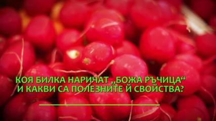 Червеният зеленчук с неподозирани свойства