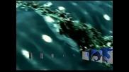 Водолази спасиха бременна китова акула край бреговете на Мексико