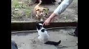 Голям смях - Кученце и котка се борят 3
