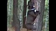 Куче Виси На Гума