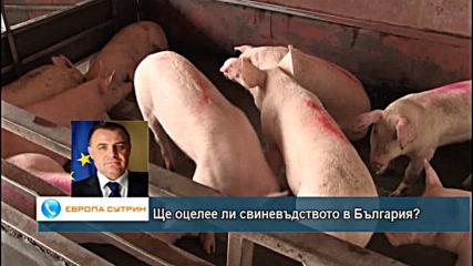 Ще оцелее ли българското свиневъдство?