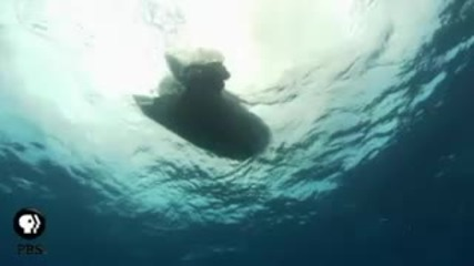 Jean - Michel Cousteau Ocean Adventures Shipwreck Pbs