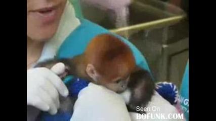 Бебе баймунка
